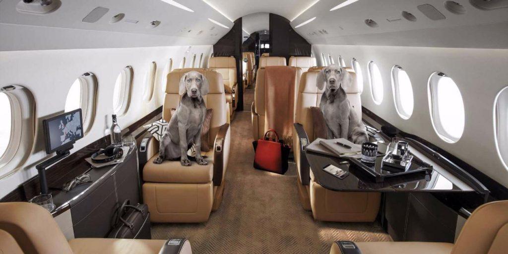 Location de jet pour transport d'animaux