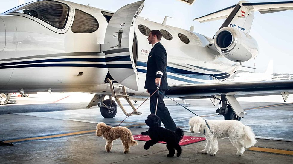 Affrètement de jet pour animaux