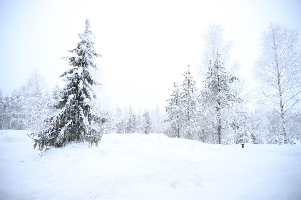 Arbre neige blanche luxe aurores boréales