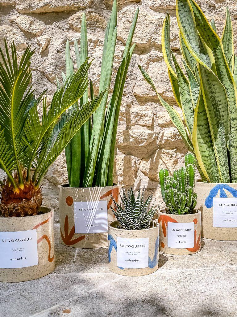 Cactus fêtes des mères 2021 by Charlot idées cadeaux vert
