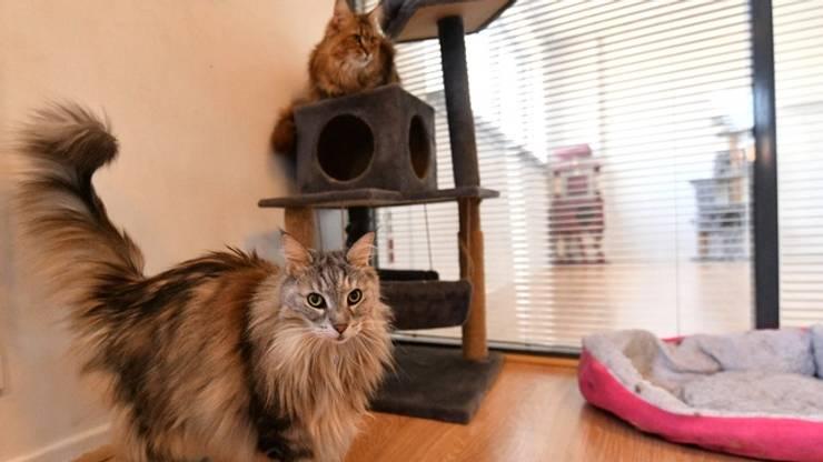 Hotel de luxe pour chat intérieur - Minute Luxe