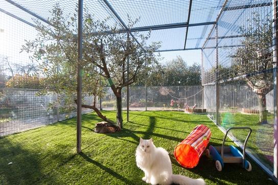 Hotel de luxe pour chat extérieur - Minute Luxe