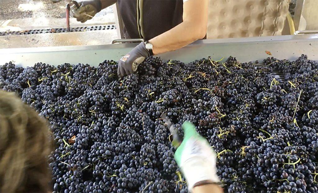 Champs vignes vin du château de la Chaize